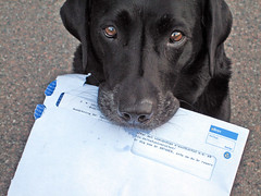 You've Got Mail (Yatzi) Tags: dog tag3 taggedout labrador tag2 tag1 scout bean adventure explore top20dogpix letter 5bestdogs msh youvegotmail bna firstthought july2006 interestingness17 i500 5hits exploretop20 photodotocontest2 msh0706 msh070618 explore19jul06 vitefl exploreandscout views2021