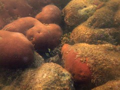 Snorkeling around the Island (Ali Onur) Tags: colombia scuba buceo busne kolombiya islafuerte clubdeorcas