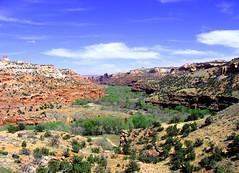 Sea of Green in a bed of Rock. (goobersmyn) Tags: utah escalante hogsback highway12 utahthe escalantecanyons utahscenicbyways landscapesboulder