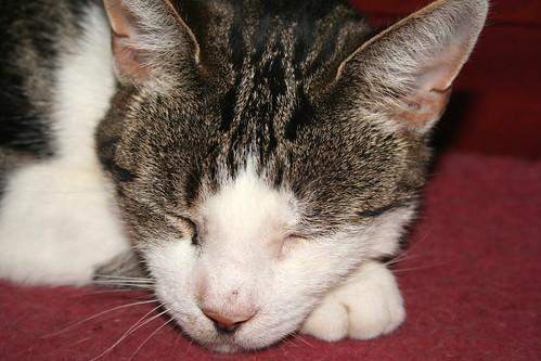 Cat nap 3