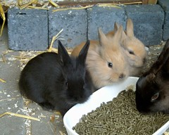 young rabbits (ksvrbrg) Tags: rabbitbabies