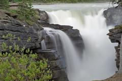 IMG_7512 (rachel_w123) Tags: icefieldsparkway canadianrockies sunwaptafalls