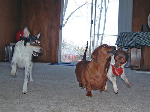2005-03-27 - DogsPlayingInside-0004