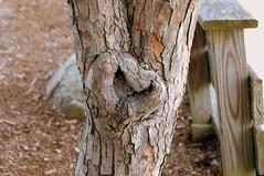 I Heart Tree.