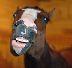 $16 million smile (Rock and Racehorses) Tags: green monkey belmont forestry thoroughbred pletcher thegreenmonkey impressedbeauty 16million