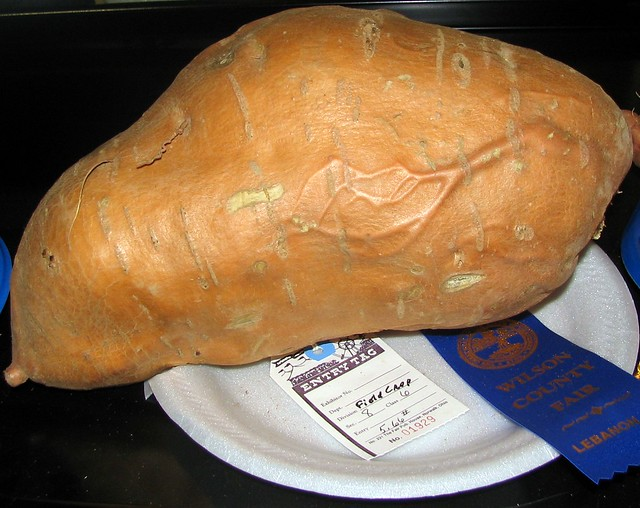Blue Ribbon Potato