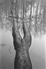 Tervuren (3) (Routavelo) Tags: park blackandwhite bw reflection tree water landscape 50mm pond belgium belgique noiretblanc nb nicolas tervuren konica paysage arbre parc etang xe5 p1f1 routavelo nicolasdh aplusphoto