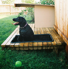 Scout in the pool (mike.palic) Tags: ball scout deck doghouse