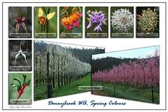 Spring Flowers - final (graeme.barrett) Tags: fruit australia orchard western wildflower donnybrook