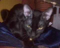 Elvira-keetan hides (Nyxy) Tags: keetans elvira phonepictars