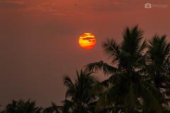 S U N S E T (ikdts360) Tags: sunset sun india tree canon landscape evening photographer tn indian tamil tamilnadu in svp senthil incredibleindia 700d t5i enchantingtamilnadu ikdts svphotography senthilvel ikdts360 svphotogrpahy svphotographyindia