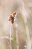 Le biplan (photosenvrac) Tags: portrait nature bokeh papillon insecte sigma150 natura2000 thierryduchamp