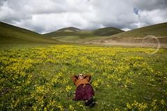Lama and Nature