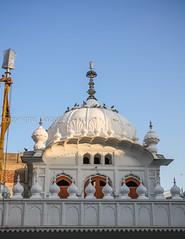 0W6A1106 (Liaqat Ali Vance) Tags: pakistan history monument architecture photography google shrine ali historical das sikhs sikh gurdwara punjab ram mandi lahore vance guru janam liaqat chuna parkash of asthan
