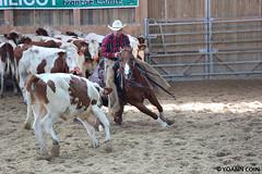 BJ1A9149 (yoann.coin) Tags: horse france western cutting equitation ncha remoray
