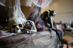 1B5A0211.jpg (invertalon) Tags: park slr halloween canon orlando florida anniversary event 25 horror theme nights universal 25th uso 2015 hhn 5d3 5dmarkiii hhn25 hhn2015