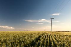 Sky & Peace (emiliokuffer) Tags: sunset sky sun sol entreríos argentina field backlight landscape atardecer ar wheat horizon paisaje alimento cielo campo horizonte trigo iphone wheatfield airelibre