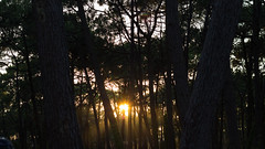 Sun behind the trees (michael.taferner) Tags: wood camping trees light sunset sea summer sky sun holiday france green beach nature hat st yellow forest canon dark eos 50mm evening sand frankreich surf shine memories ii lensflare fixed 18 wald find ef atlantik focal lenght 600d giorons