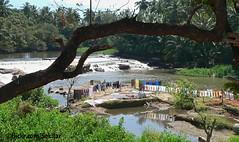 Laundry place, Tamil Nadu (Sekitar) Tags: india river place laundry washing tamil tamilnadu nadu sungai pemandangan earthasia