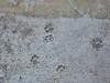IMGP0661 (d_fust) Tags: cat kitten gato katze 猫 macska gatto fust kedi 貓 anak katt gatito kissa kätzchen gattino kucing 小貓 고양이 katje кот γάτα γατάκι แมว yavrusu 仔猫 का बिल्ली बच्चा