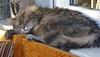 IMGP0605 (d_fust) Tags: cat kitten gato katze 猫 macska gatto fust kedi 貓 anak katt gatito kissa kätzchen gattino kucing 小貓 고양이 katje кот γάτα γατάκι แมว yavrusu 仔猫 का बिल्ली बच्चा