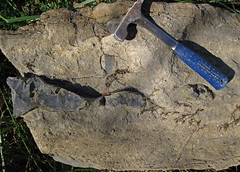 Fossiliferous chert nodules in fossiliferous limestone (Boggs Limestone, Pennsylvanian; Rt. 93 roadcut north of Mt. Pleasant, Hocking County, Ohio, USA) 2 (James St. John) Tags: county ohio fossil mt group limestone member hocking pleasant fossils fossiliferous nodules chert boggs pottsville limestones nodule pennsylvanian