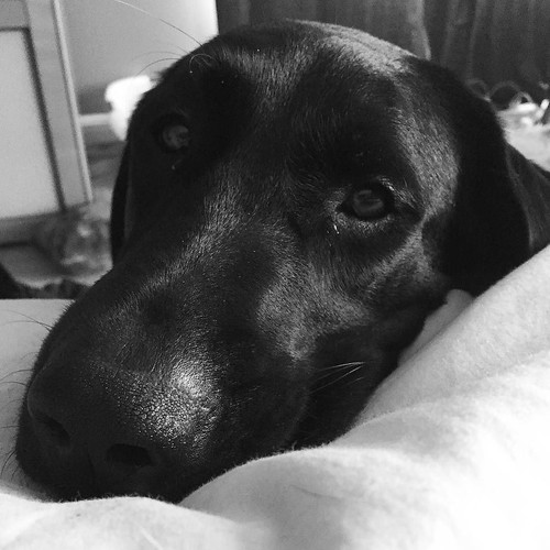 My girl #blacklab