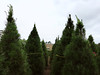 (dignifiable) Tags: christmas travel color colour digital photography sydney australia nsw newsouthwales christmastreefarm dural