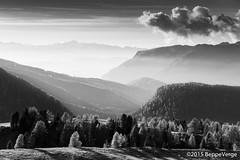 Panorama dal Passo Rolle - Dolomiti (beppeverge) Tags: autumn mountain alps fall italia it foliage autunno alpi montagna unescoworldheritage dolomites dolomiti altoadige dolomiten italianlandscape sudtirol ladino larici trentinoaltoadige siror beppeverge