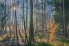 autumn clours in december - Herbstfarben im Dezember (ralfkai41) Tags: autumn colours herbst nature mist outdoor licht wald natur light baume sonnenstrahlen nebel blätter schatten forest sonne farben sunbeam leafs shadow sun trees dunst