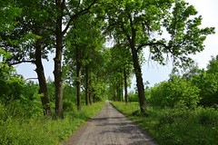 late spring (JoannaRB2009) Tags: green spring trees alley avenue path road countryside nature landscape view light shadow łódzkie lodzkie polska poland