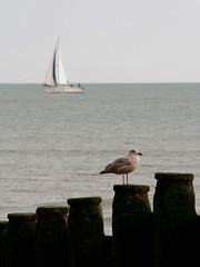 IMG_3793 (TheMrsMiggins) Tags: seaside seagull boat groin