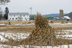 Amish farm with windmill (WORLDS APART PHOTO) Tags: stook farm amish kingston wisconsin shockedfield kingstonwisconsin amishsettlement plain agriculture windmillwednesday windmills winter field outdoors