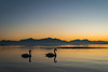 Happy new year!! (MSC_Photography) Tags: happy new year 2017 lake chiemsee schwan schwäne swan berge alpen mountains alps bayern bavaria deutschland germany seebruck abend evening sonnenuntergang sunset nikon d200 28mm f35 ai mf