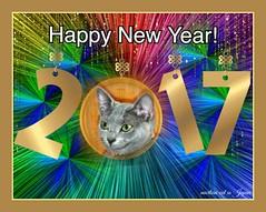 Happy New Year 2017 (martian cat) Tags: russianblue newyears kitty kittycat cat pet ©martiancatinjapan allrightsreserved© happynewyear glücklichesneuesjahr omedettogozaimasu ハッピーニューイヤー 明けましておめでとうございます bonneannée felizañonuevo buonanno macro marin ©allrightsreserved martiancatinjapan© cards merrychristmas motivational joyeuxnoël fröhlichiwiehnacht kurisumasuomedeto feliznavidad メリークリスマス buonnatale motivationalposter inspirational ☺allrightsreserved allrightsreserved caption captioncollection christmas christmasmemories ☺martiancatinjapan creativity girlkitten kitten forrecords stolenimage martiancat martiancat© ©martiancat martiancatinjapan