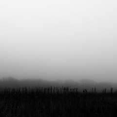 Vanishing Landscape 013 (noahbw) Tags: d5000 nikon abstract blackwhite blackandwhite bw fog foggy forest horizon landscape light marshland minimal minimalism mist misty monochrome natural noahbw prairie quiet sky spring square still stillness trees wetlands woods vanishinglandscape cloudsskiesandsuch