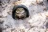 Don't come a step closer! (Dr. Farnsworth) Tags: bird owl small cute burrowingowl orlando audubon center fl florida winter january2017 flickrsbest ngc nationalgeographic fantasticnature