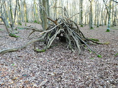 Wild Thing (ART NAHPRO) Tags: woods trees evening forest rustic shelter sussex winter january 2017 donaldtrumpinaugurationday