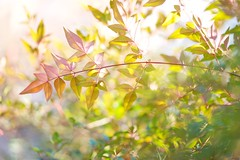 DSC08780 (@saka) Tags: autoupload leaves 599602 flowers 43324338 trees 52 street 4751