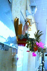 Orquídea na parede (José Argemiro) Tags: red orchid flower wall flor decoração redflower parede orquídea 兰花 墙 florvermelha 红色的兰花