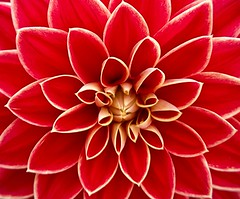 dahlia-186450 (frugaltimesinc) Tags: ocean old city nyc travel flowers blue autumn trees winter light sunset red sea sky blackandwhite orange white snow chicago newyork abstract black mountains flower color tree green art love beach nature water beautiful beauty leaves yellow skyline architecture modern clouds forest vintage painting landscape outdoors photography rocks colorful wildlife bison celestialimages adamasar
