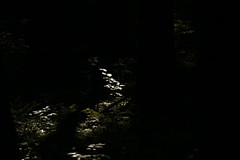 Magic Forest (gripspix (OFF)) Tags: light fern forest licht wald highlight beech farn buche 20150904