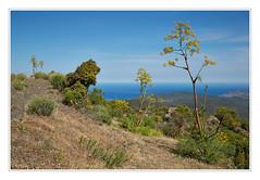 am Col de Colombano (macplatti) Tags: blue panorama frankreich corse corsica bleu blau incredible landschaft fra phantastic korsika greatview fenchel olmicappella beautyoflandscape