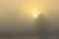 sunrise behind the fog (Dirk Hoffmann Fotografie) Tags: autumn sun fog sunrise river nebel fluss elbe