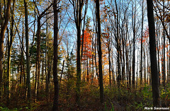 Still one left (mswan777) Tags: autumn red sky tree fall nature leaves forest landscape outdoors leaf woods nikon hiking michigan trail 1855mm nikkor d5100