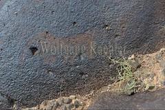 30095290 (wolfgangkaehler) Tags: old horse rock asian ancient asia desert mongolia centralasia petroglyph gobi blackmountains petroglyphs mongolian gobidesert southernmongolia