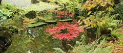 japanse tuin okt 2015 03 (gabrielgs) Tags: autumn colors japanese japanesegarden forrest herfst thenetherlands denhaag bos thehague clingendael japansetuin