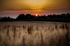 unbenannt-6004 (tobiasvogel30) Tags: sunset field sundown stuttgart sommer feld wolken lichter suttgart endersbach weinstadt