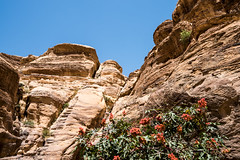 DSC_1573 (vasiliy.ivanoff) Tags: voyage trip travel tour petra jordan journey traveling neareast الأردن البتراء петра иордания ближнийвосток الشرقالاوسط خاورنزدیک המזרחהקרוב