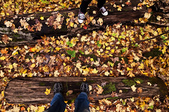 302/365 (local paparazzi (isthmusportrait.com)) Tags: autumn detail green fall colors leaves yellow leaf amazing pod shoes colorful pretty raw bright zoom iso400 vibrant fallcolors wide clarity fallen stump trunk madisonwi 16mm ultrawide chucks arb newbalance shoelaces sharpness 2015 canonraw cr2 thearboretum 365project danecountywisconsin photoshopelements7 canon5dmarkii localpaparazzi redskyrocketman lopaps tokina1628f28 isthmusportrait